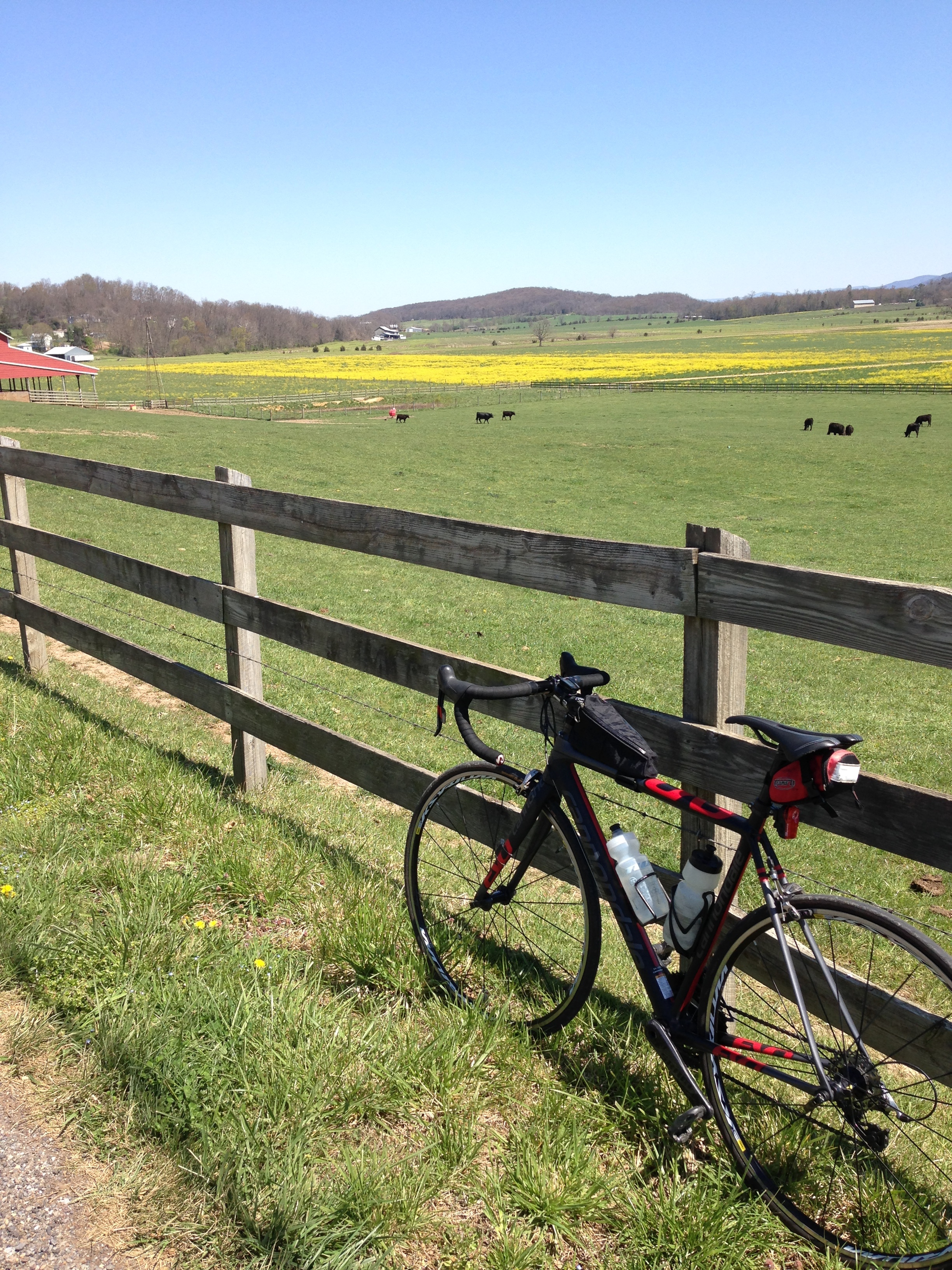 Wildflowers and farmland view from bicyle shenandoah valley bike ride
